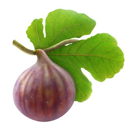 feuille de vigne: Figue fraîche sur la branche isolé sur blanc Banque d'images