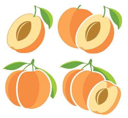 apricot: Collection of apricot vector illustrations