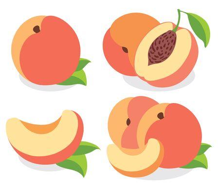 peach: Peaches  illustrations