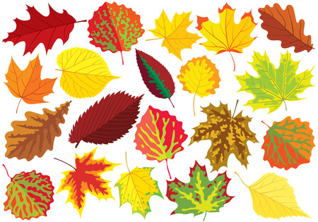 different types: Colorful autumn leaves, collection of  illustration Illustration