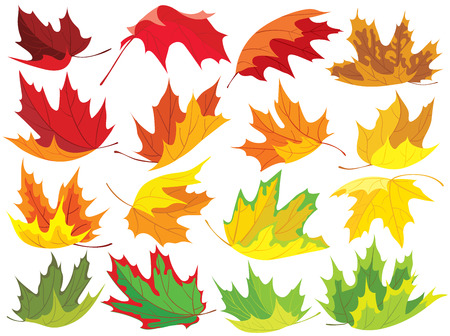 simplified: Collection of colorful maple leaves Illustration