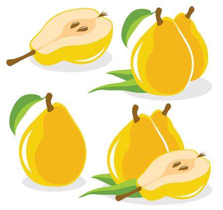 pears: Yellow pears vector illustration