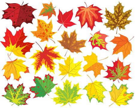 orange trees: Colorful maple leaves, vector collection