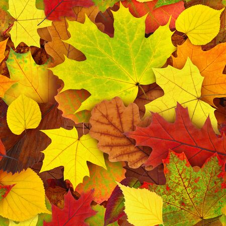 Seamless colorful autumn leaves background