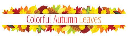 화려한 가을 테두리, 벡터 일러스트 레이 션, 잎 일러스트