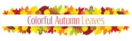 Colorful autumn leaves border, vector illustration
