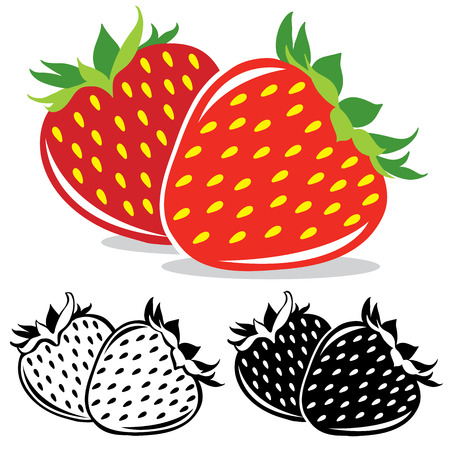 fresh strawberries: Vector strawberries  in color and black and white