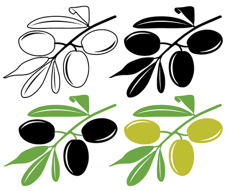 green and black: Vector olives in color and black and white