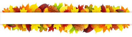 aspen leaf: Colorful autumn leaves banner with clipping path Stock Photo
