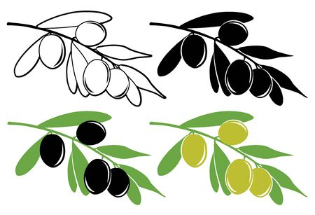 olive: Vector branch with olives in color and black and white