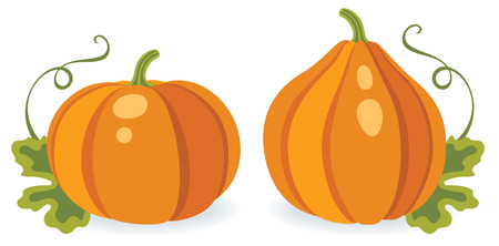 different types: Two pumpkins of different shape, vector illustration Illustration