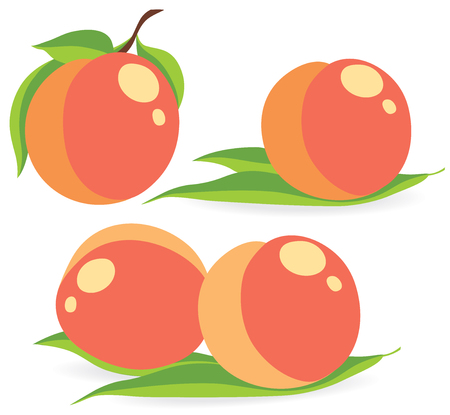 apricots: Collection of peaches ot apricots vector illustrations