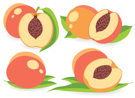simple cross section: Set of peaches vector illustrations Illustration