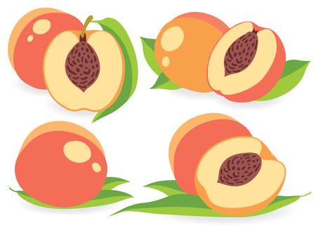 peaches: Set of peaches vector illustrations Illustration
