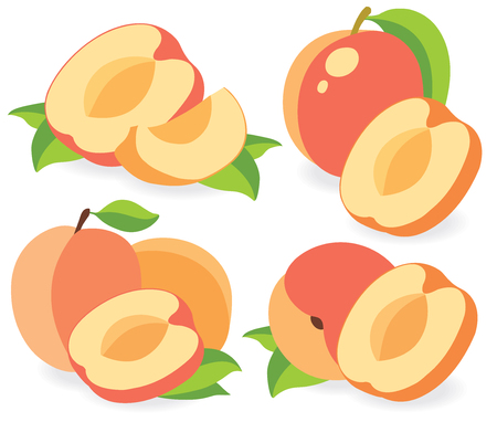 simple cross section: Collection of apricots or peaches vector illustrations
