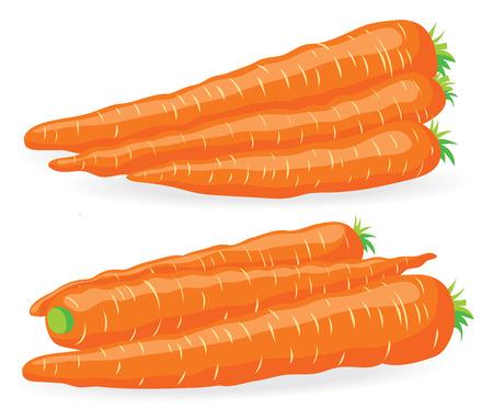 heaps: Two heaps of fresh carrots vector illustration Illustration