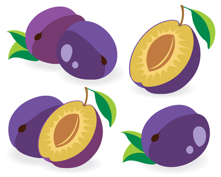 plums: Collection of vector plums, whole and halves