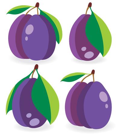prune: Fresh plumes vector illustrations set