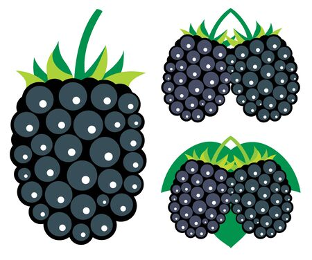 dewberry: Blackberries Illustration