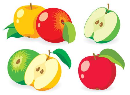 the fresh apple: Fresh apple fruits Illustration