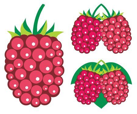 dewberry: Raspberries  illustrations Illustration