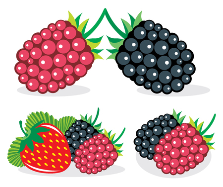 mixed: Mixed berries, collection of vector illustrations Illustration