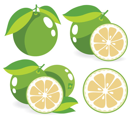 simple cross section: White grapefruits, collection of vector illustrations