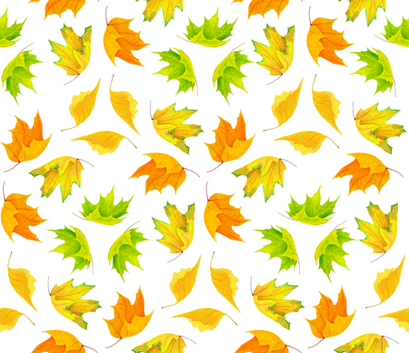 Seamless pattern with colorful autumn leaves isolated on white background