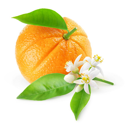Isolated orange fruit and flowers. One fruit and branch with orange tree blossoms isolated on white background 写真素材