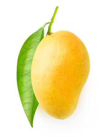 Tree branch with leaves and yellow mango isolated on white background 写真素材 - 129395135