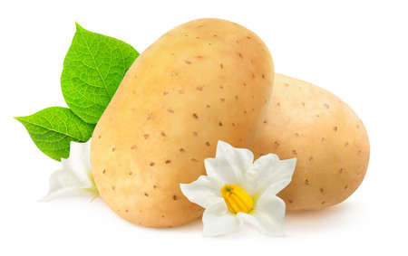 Isolated potatoes. Two raw potato fruits, leaves and flowers isolated on white background 写真素材
