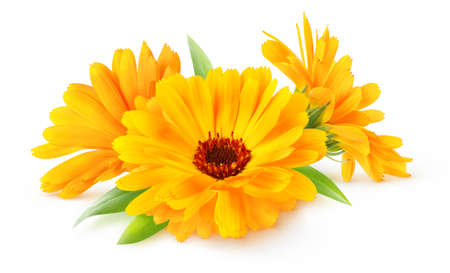 Three flowers of calendula (marigold) isolated on white background 写真素材