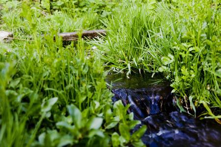dampen: River origin on green meadow
