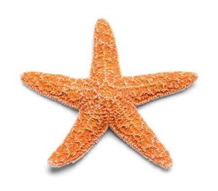 Sinlge 진짜 주황색 불가사리 흰색 배경에 고립. 스톡 콘텐츠