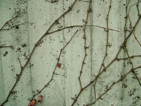 soli: Gray cement wall with branches