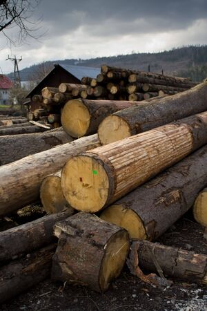 lumber mill: Lumber mill with wood storage, visible big trunk. Stock Photo