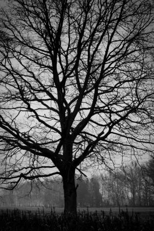 Woodland - tree. B&W photography, low key photo