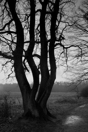 Woodland - tree. B&W photography, low key Stock Photo - 5346450