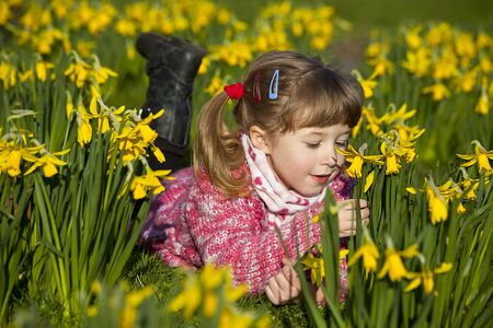 little girl lying on the meadow with daffodils photo