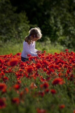 small cute girl on a red poppy field