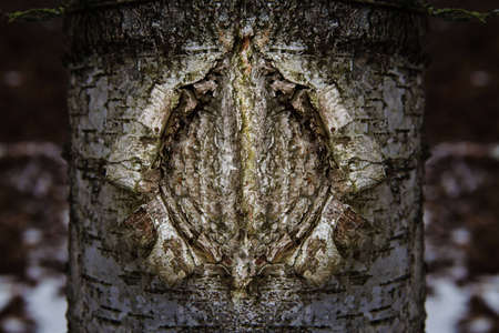 a birch tree texture with the shape like a woman vagina Stock Photo - 12770830