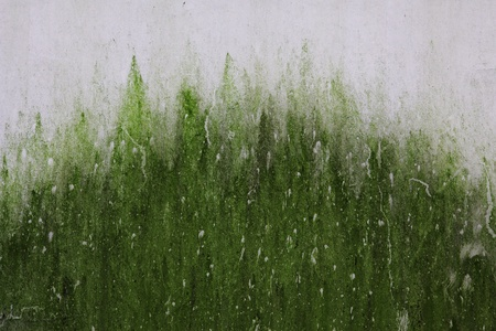 texture of damp wall with the moss on like foggy jungle Stock Photo - 12770840