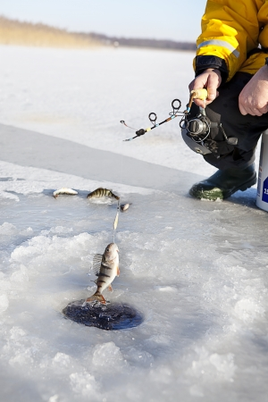 ice fishing: man ice fishing for the perch fish  Stock Photo