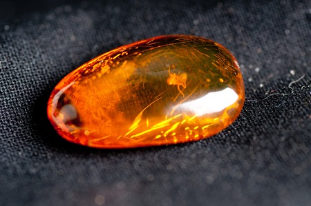 calcification: amber with insect fossillized inside the crystal, science