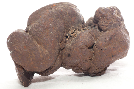 fossilized: pseudocoprolite or coprolite sample, a form of fossilized poop Stock Photo