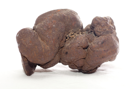 excretion: pseudocoprolite or coprolite sample, a form of fossilized poop Stock Photo