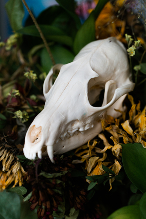 Skull fox in a bouquet of flowers wilted sunflower bouquet. Stock Photo
