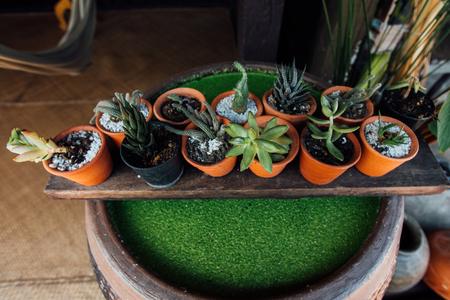 Muchas pequeñas ollas de arcilla con plantas en una bóveda de cañón junto a una tienda en la calle.
