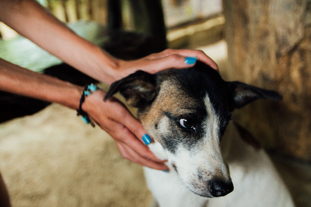 hands of the girl stroked the dog homeless, street Stock Photo