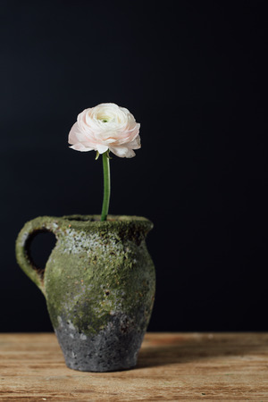Single gentle pink buttercup flower in a vintage vase on a wooden table. Zdjęcie Seryjne
